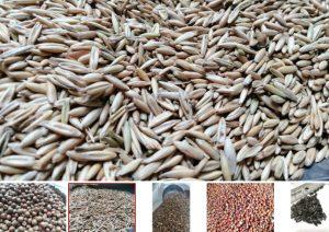 Nhà cung cấp ngũ cốc cho gà đá